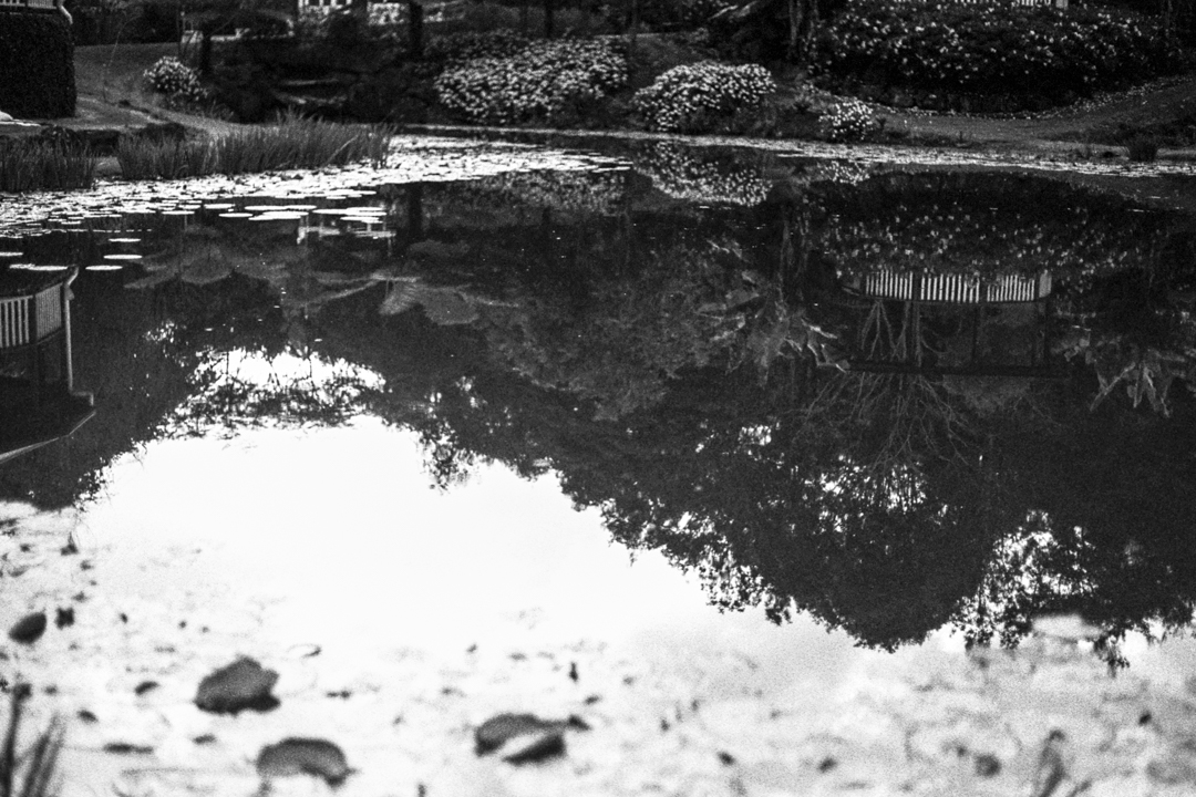 Maleny Botanic Gardens, Sunshine Coast Hinterland