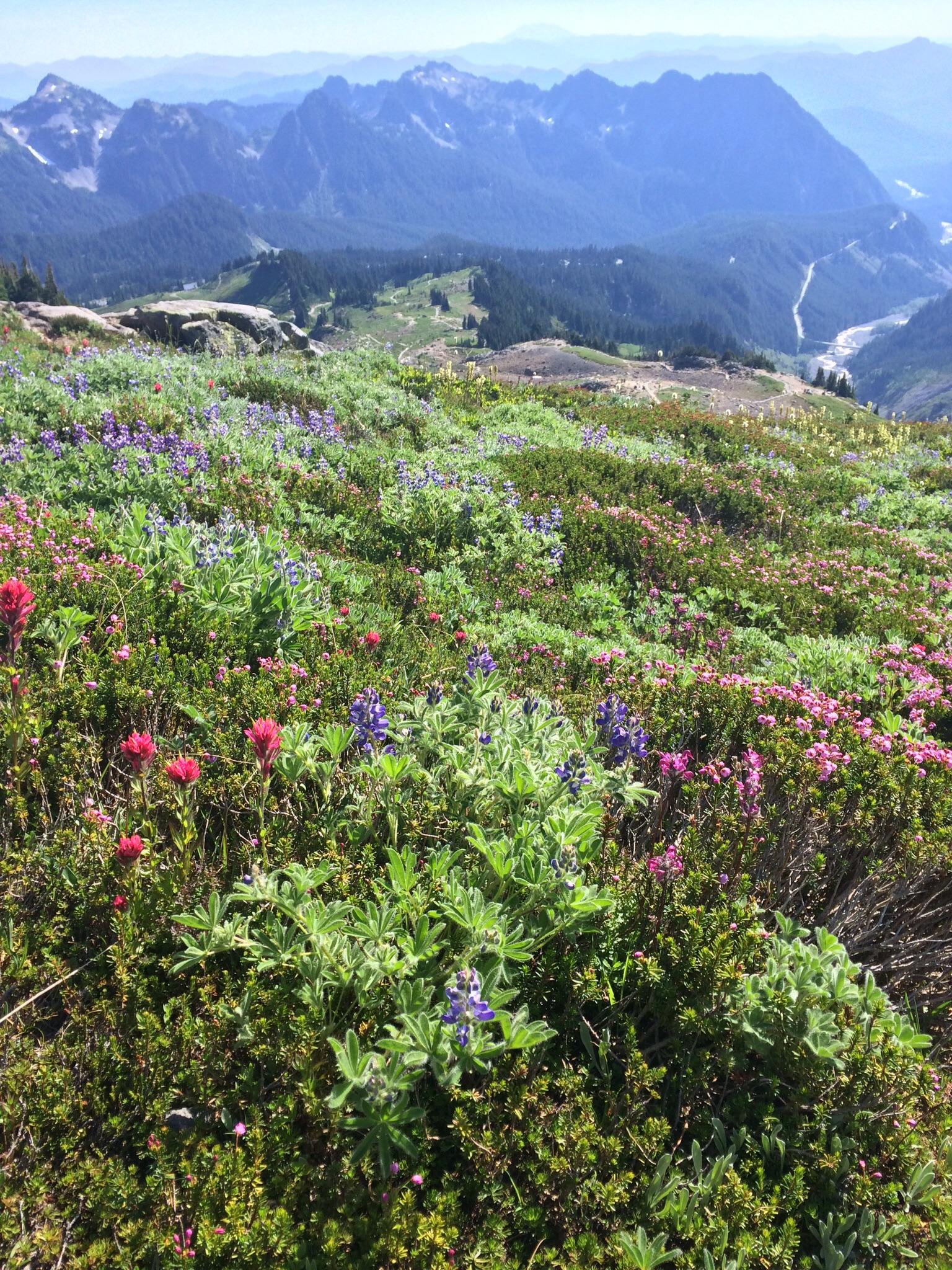 Smelll the wild flower fields on Mt. Rainier.