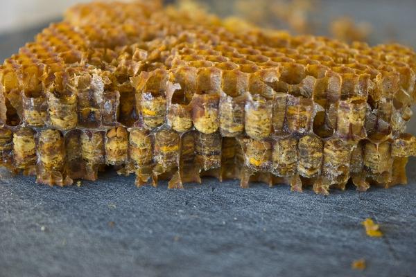 Biene blander pollen og nektar og tilsetter enzymer fra egne kjertler. Dette blir pakket ned i vokskake-celler i bikuben. En liten dråpe honning tilsettes på toppen av hver celle for å forsegle den og sikre anaerob fermentering. Foto: Josh Pollen (ja, han heter det :-) )