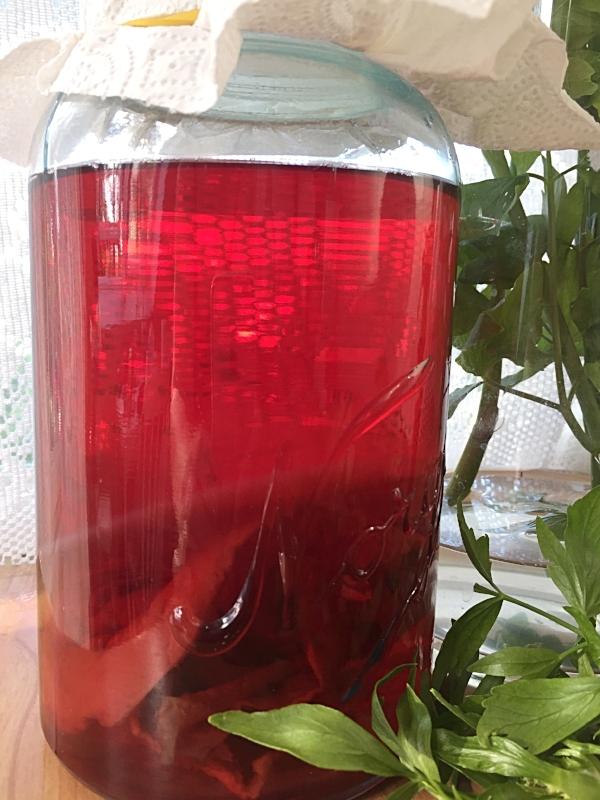 Kombucha brygges her med te av hibiskusblomster.