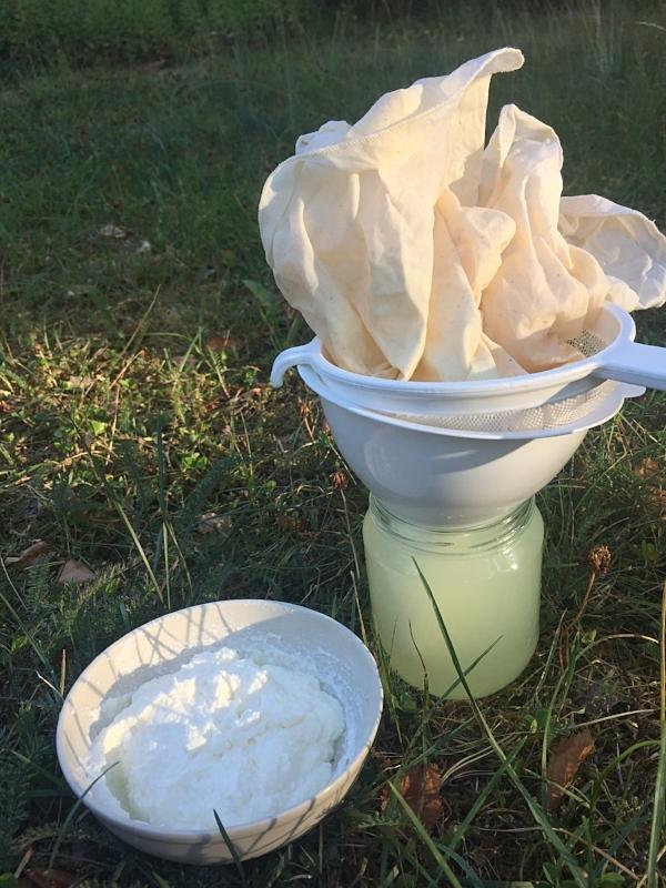 Ostemasse fra kefir i skålen. Myse i glasset.