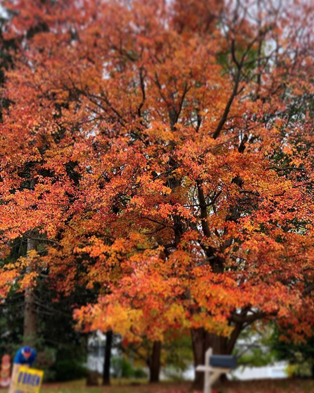 Fall colors #nofilter #autumn #fall