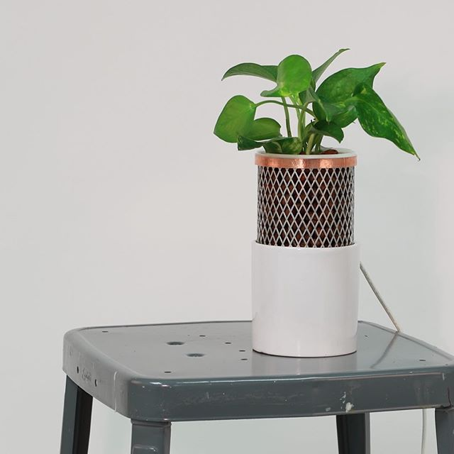 Did you know that plants naturally purify air? Tera, the natural air purifier, enhances your plant's air purification abilities so you can breathe fresher air. Learn more now. 👆Link in bio👆