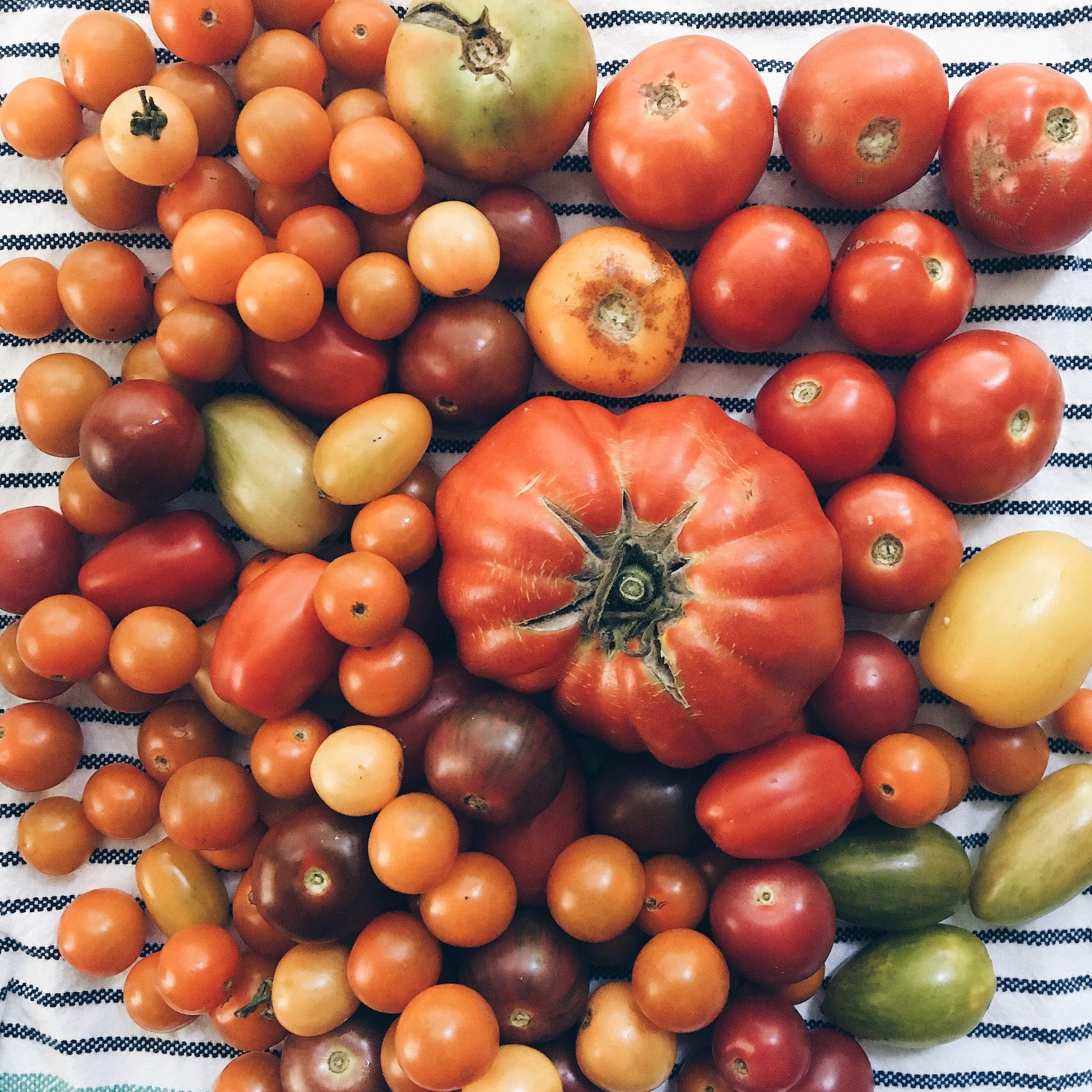 Tomatoes, ho!