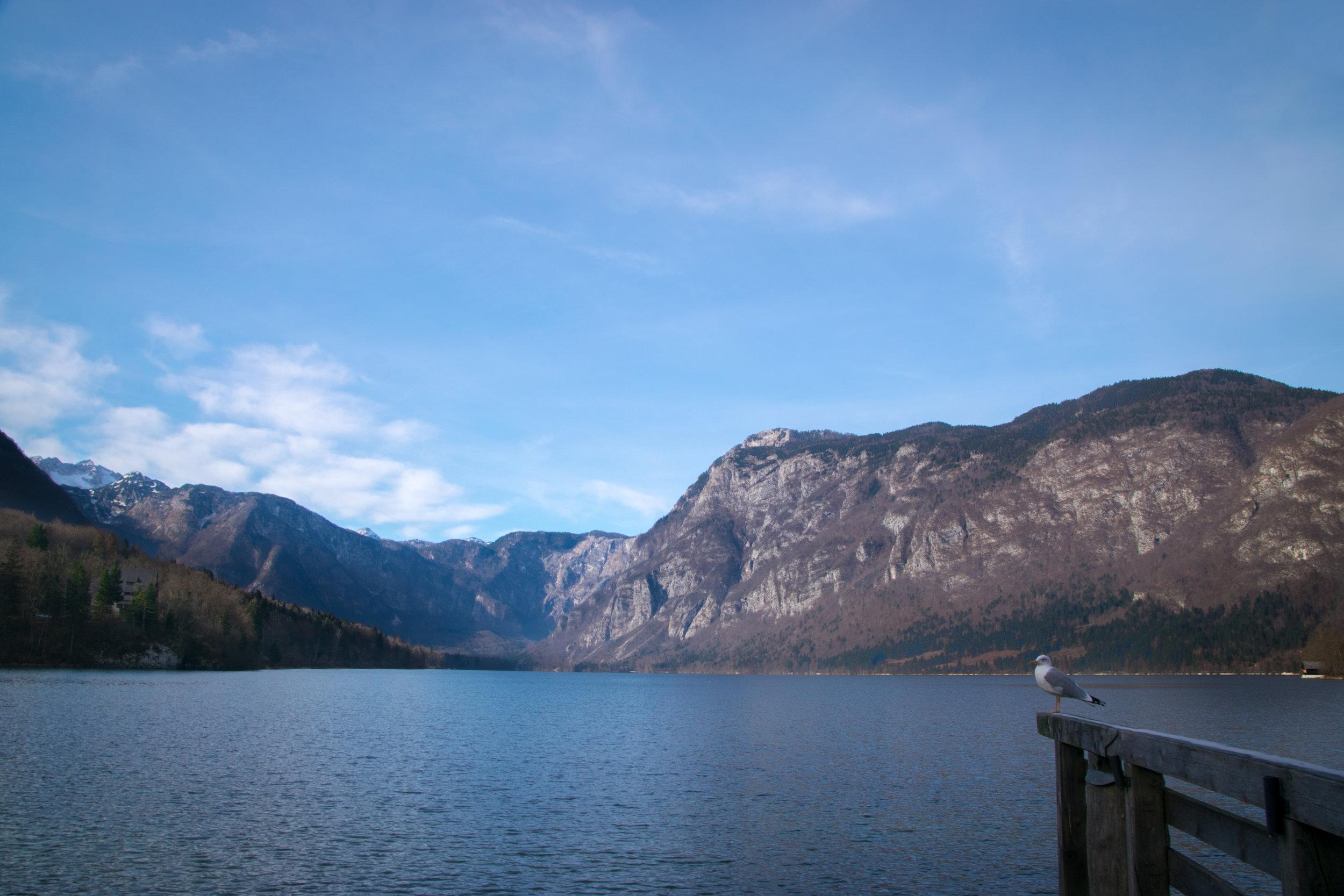 Lake Bohinj-1-2.jpg