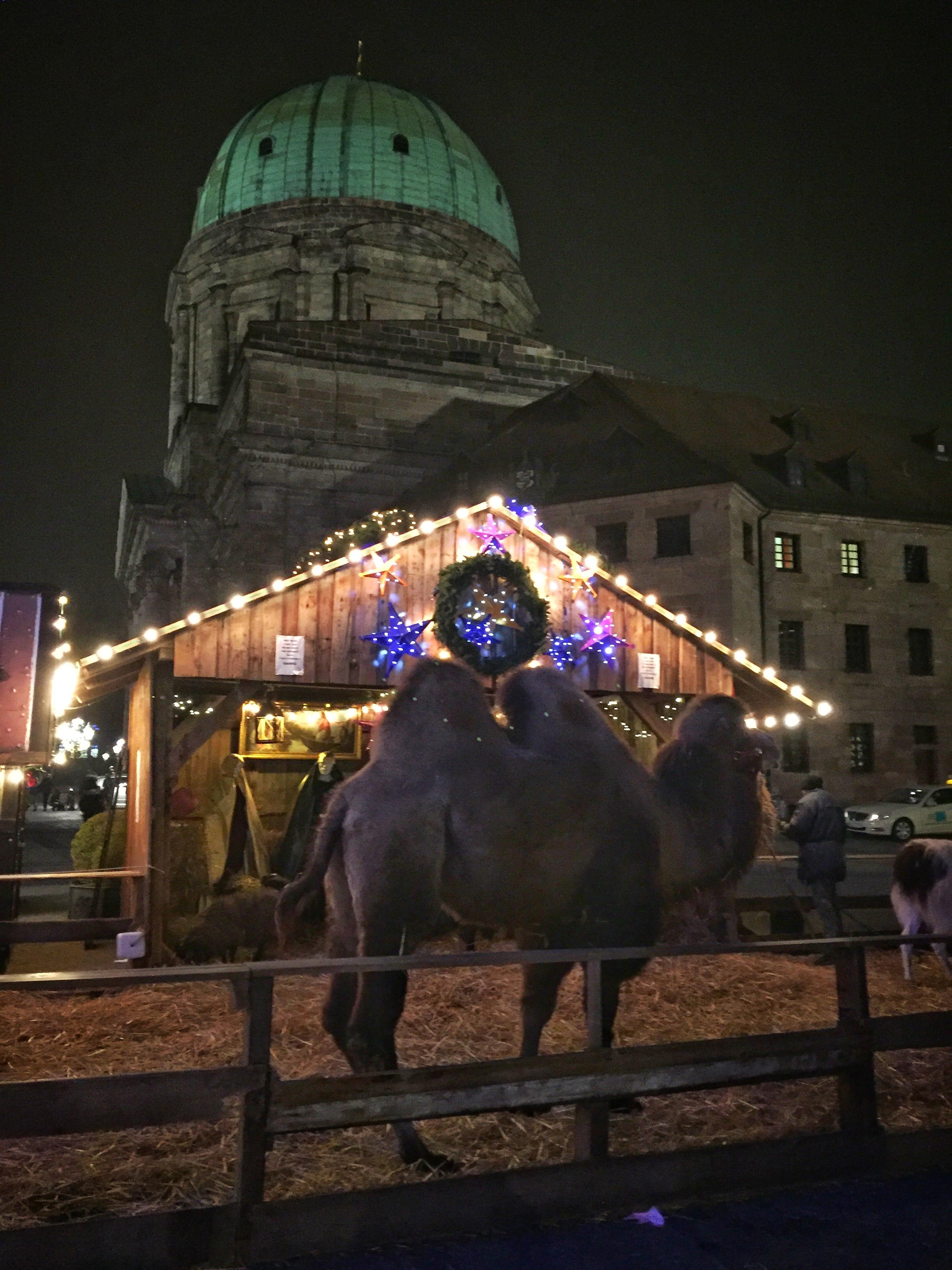 a sad, awkward camel rounds out the nativity scene