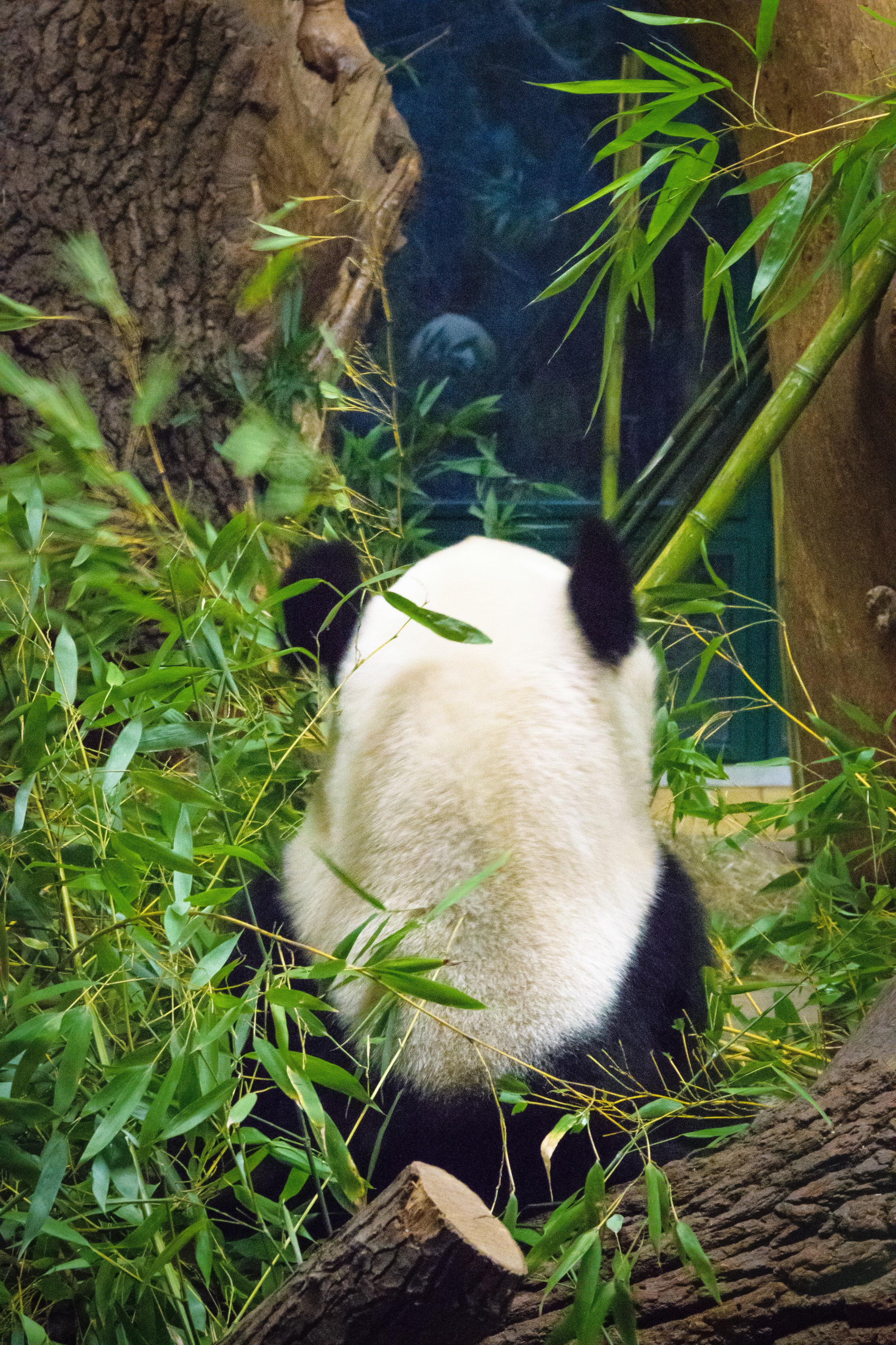 the backside of a sad panda