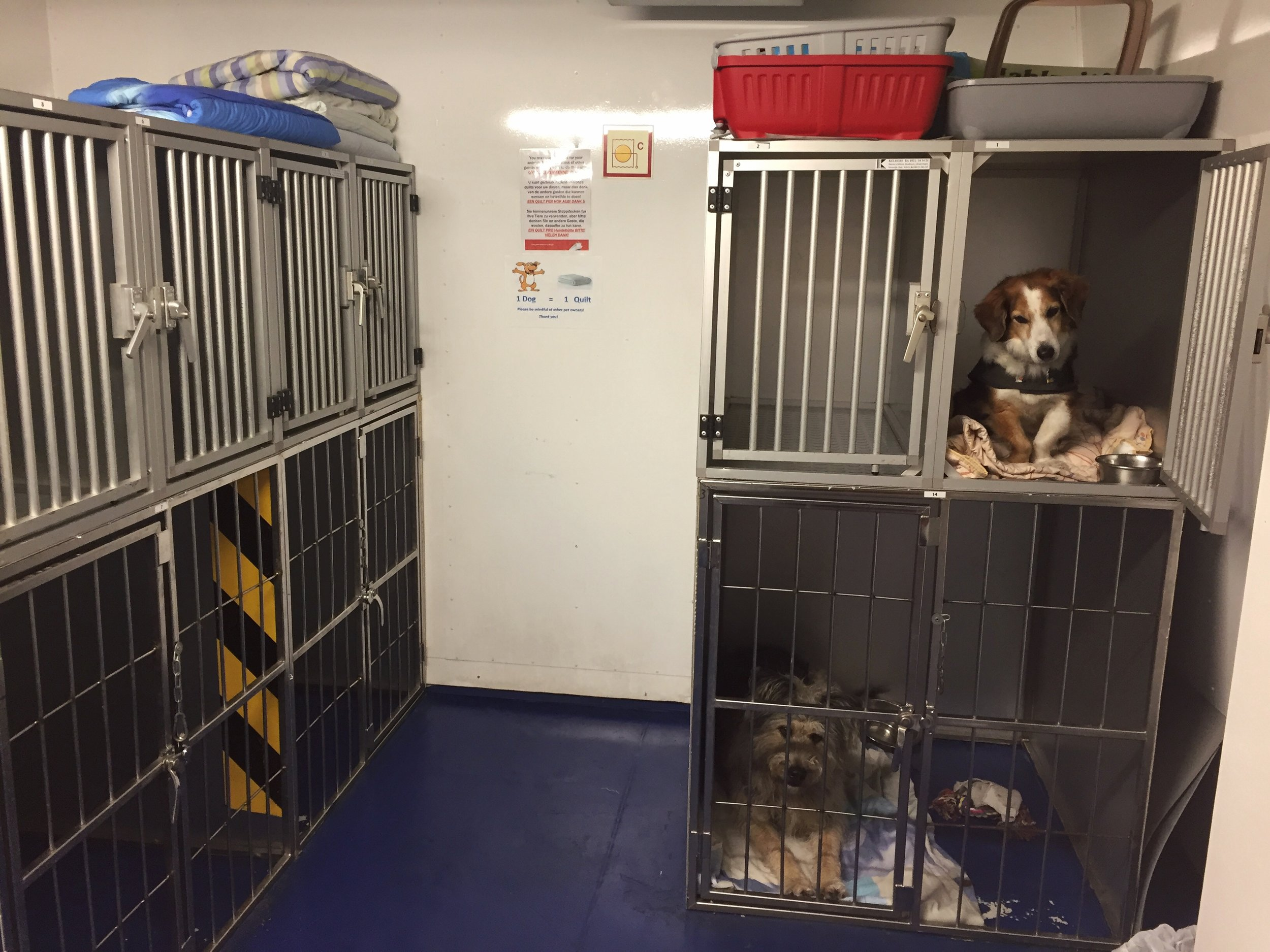 in a kennel...