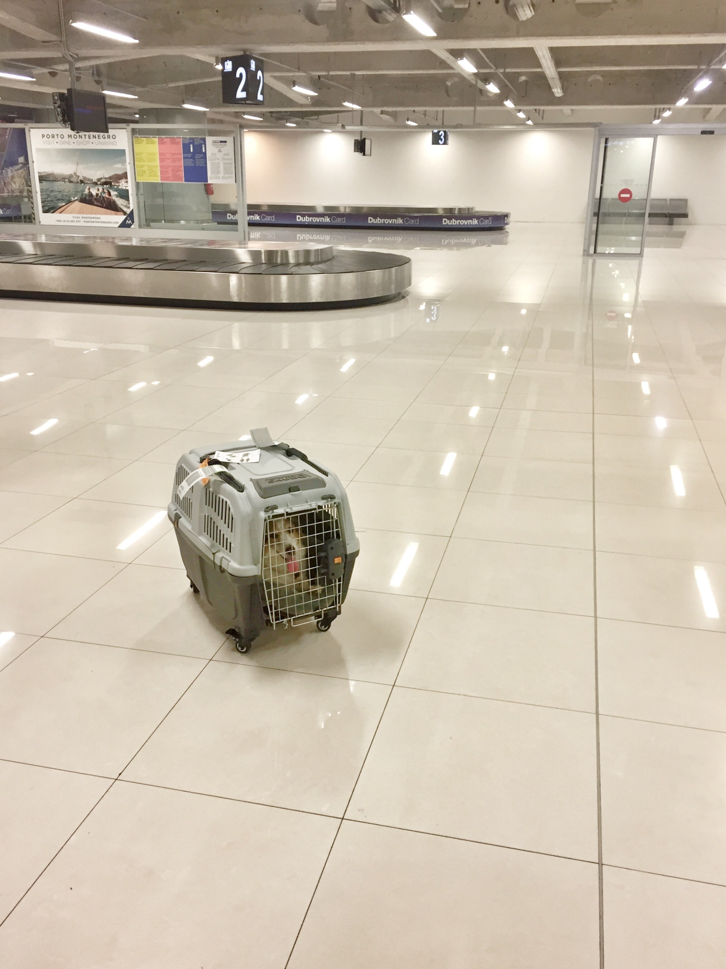 dog carriers need not apply to ride trains and public transit in Europe