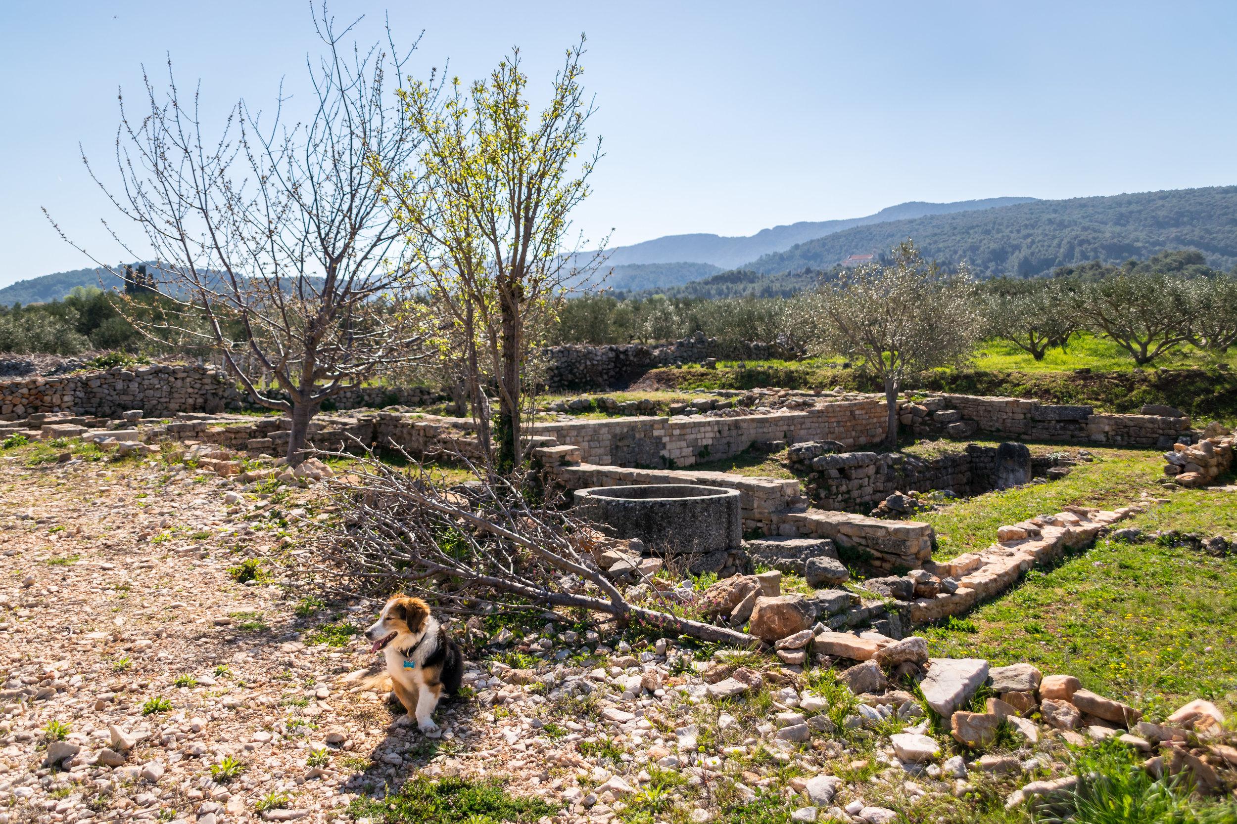 Mango enjoys the ancient estate of Kupinovik