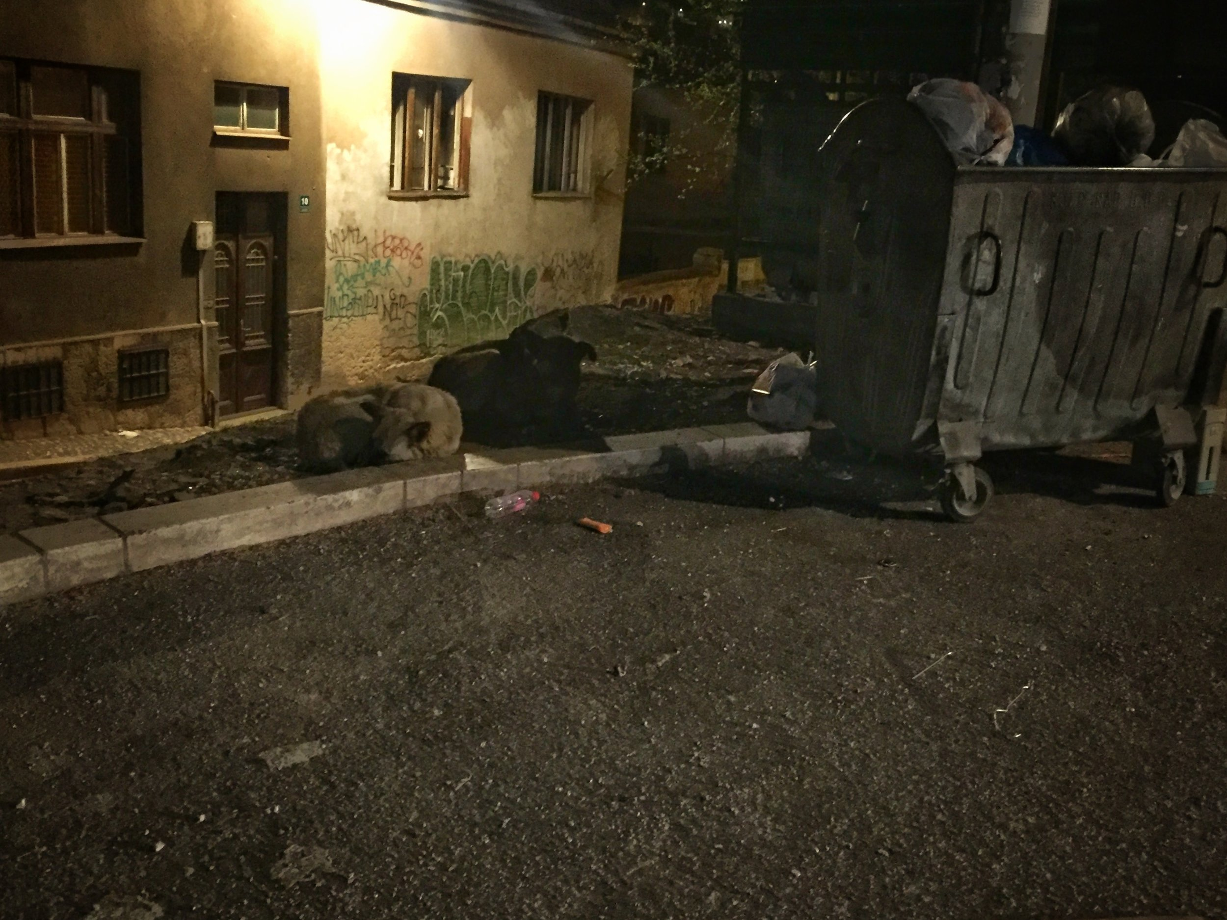 street dogs sleeping near the dumpster