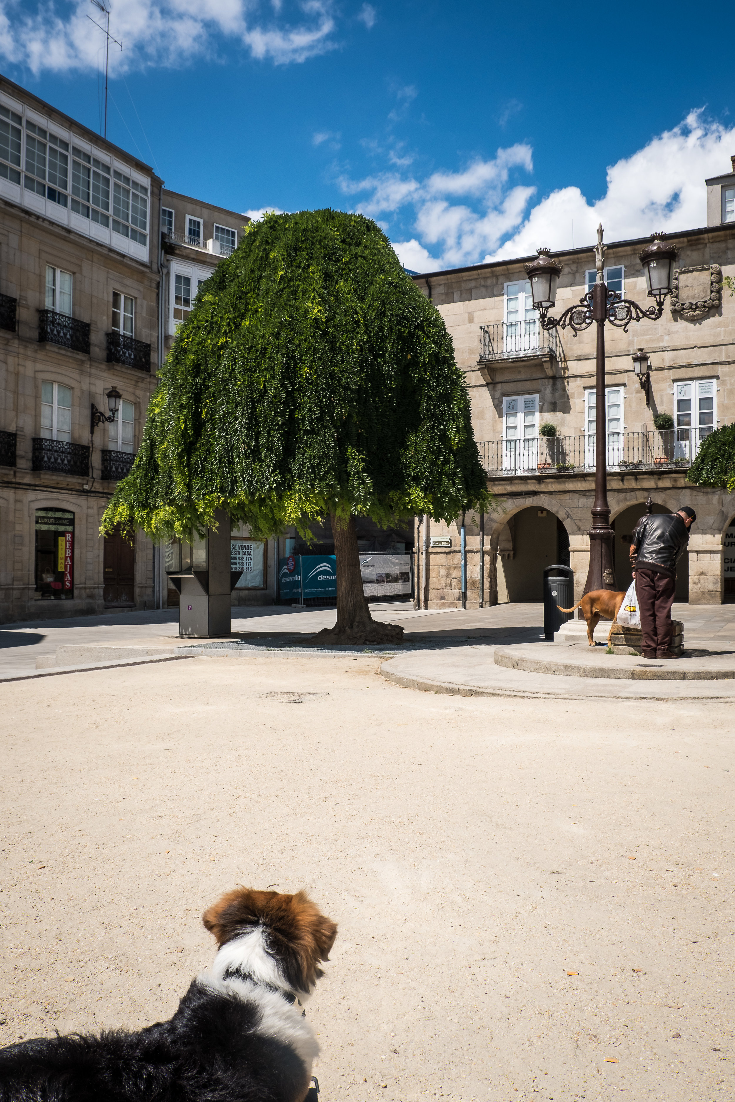 Lugo-13.jpg