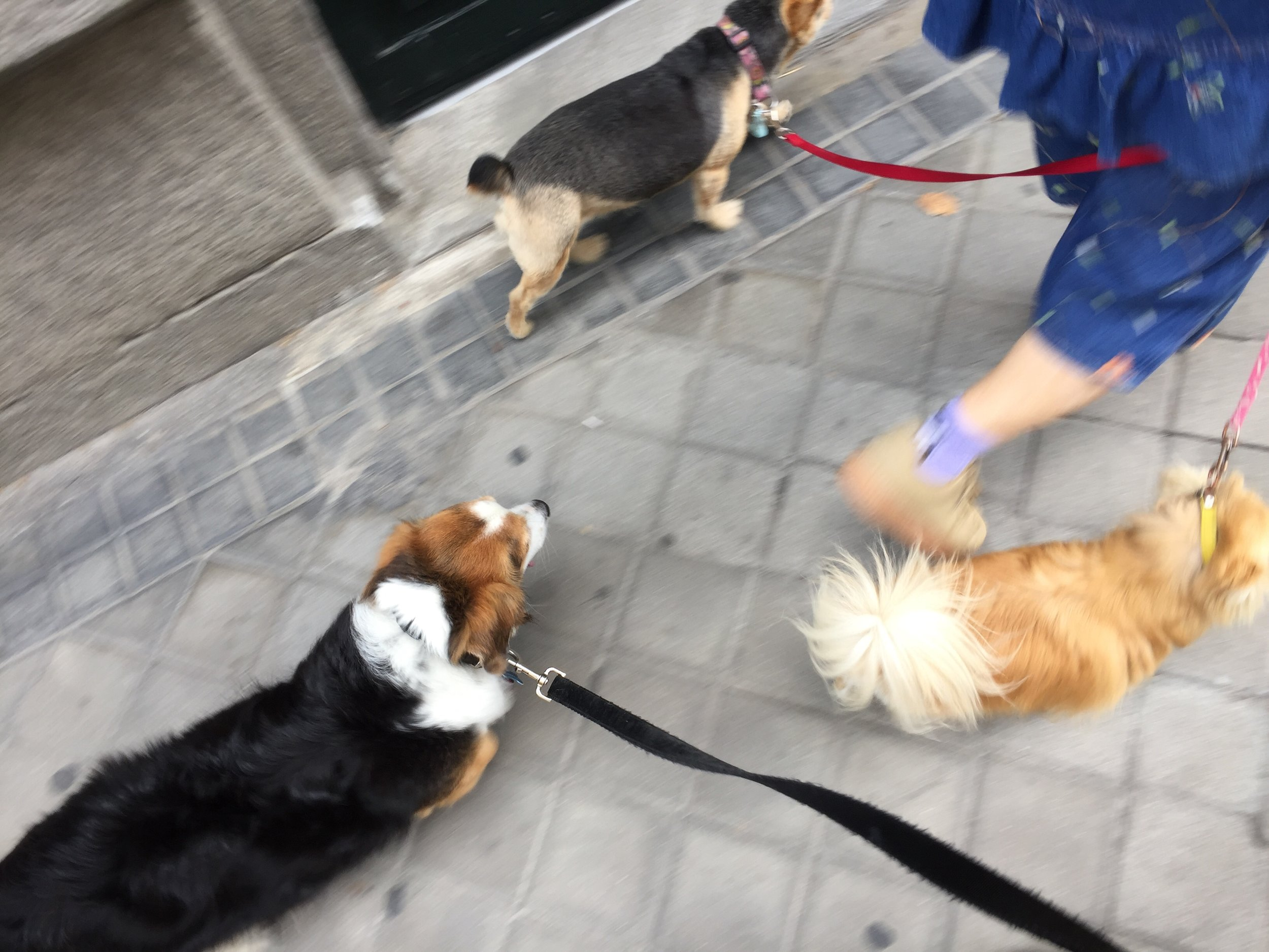 Lucía leads the pack