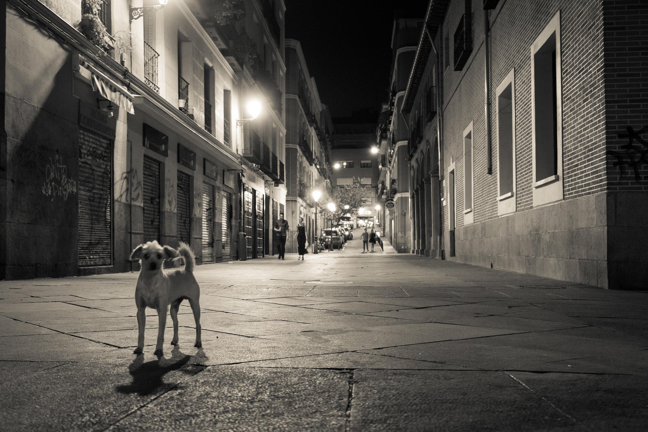 3_dogs-3.jpg
