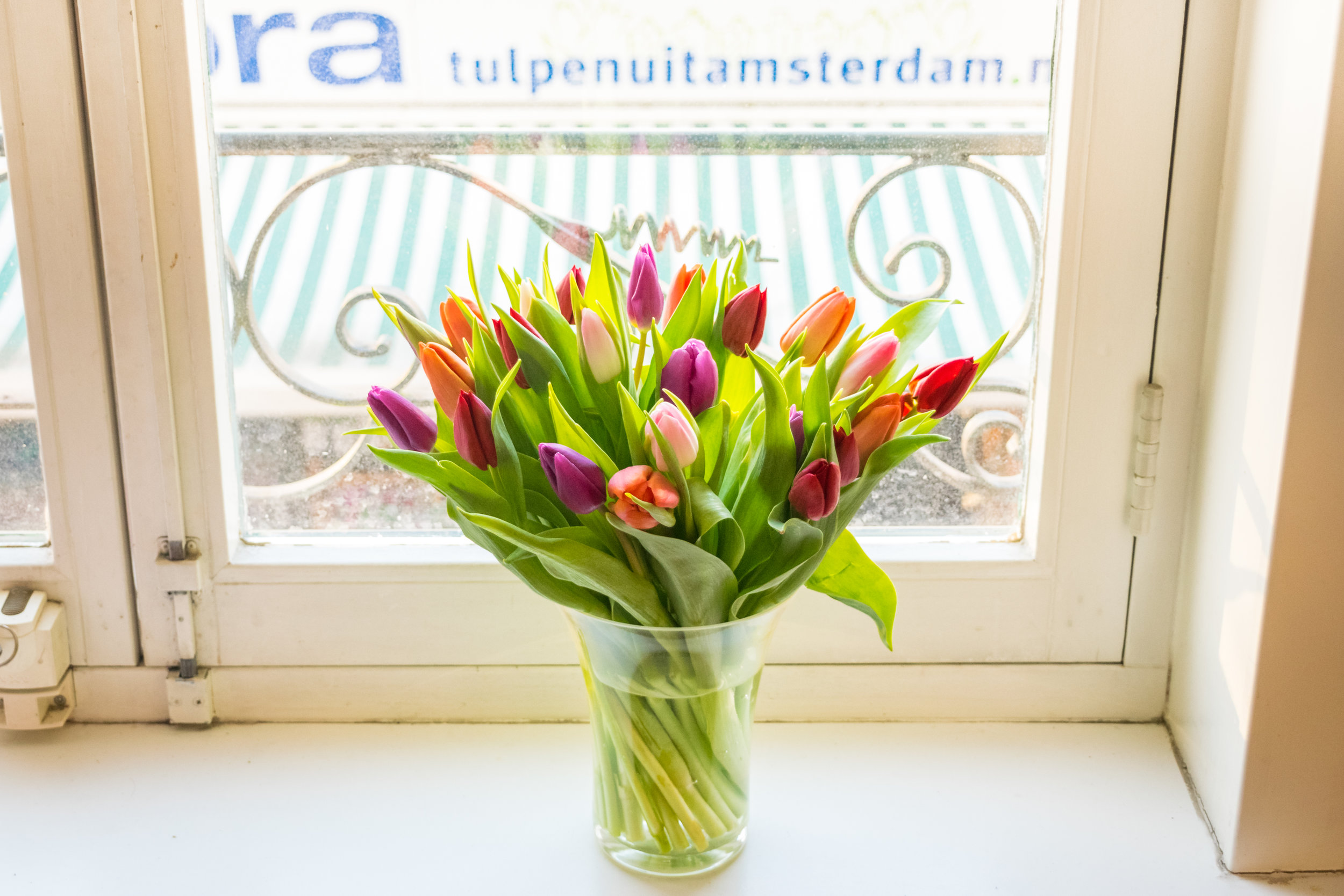 Netherlands_tulips.jpg