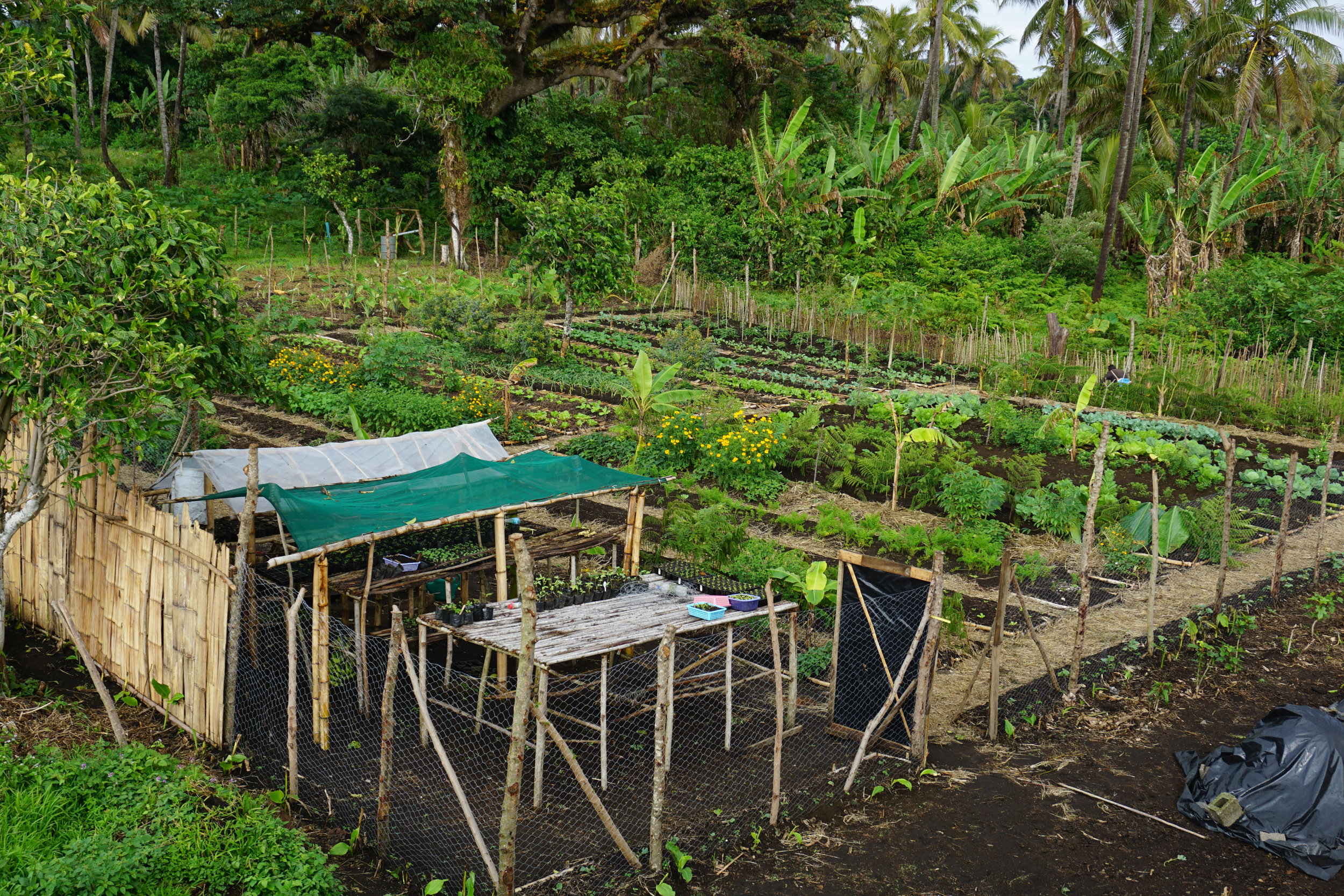 Permaculture Demonstration Site Tanna Island, Vanuatu
