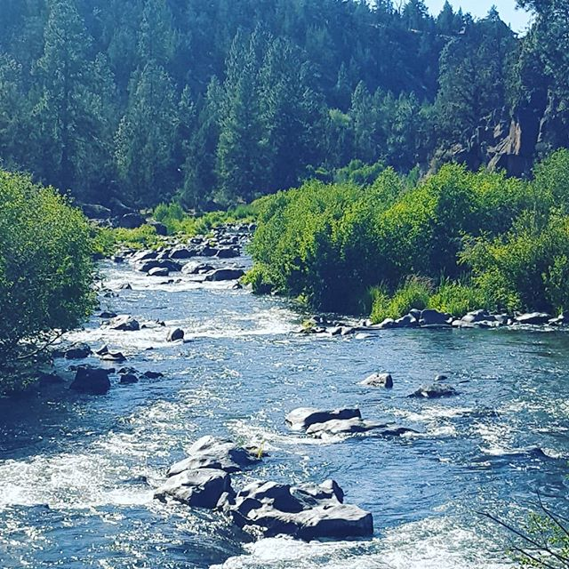 I'm missing Oregon already! Its so great to be outside in nature! Hope you are relaxing outside today too!