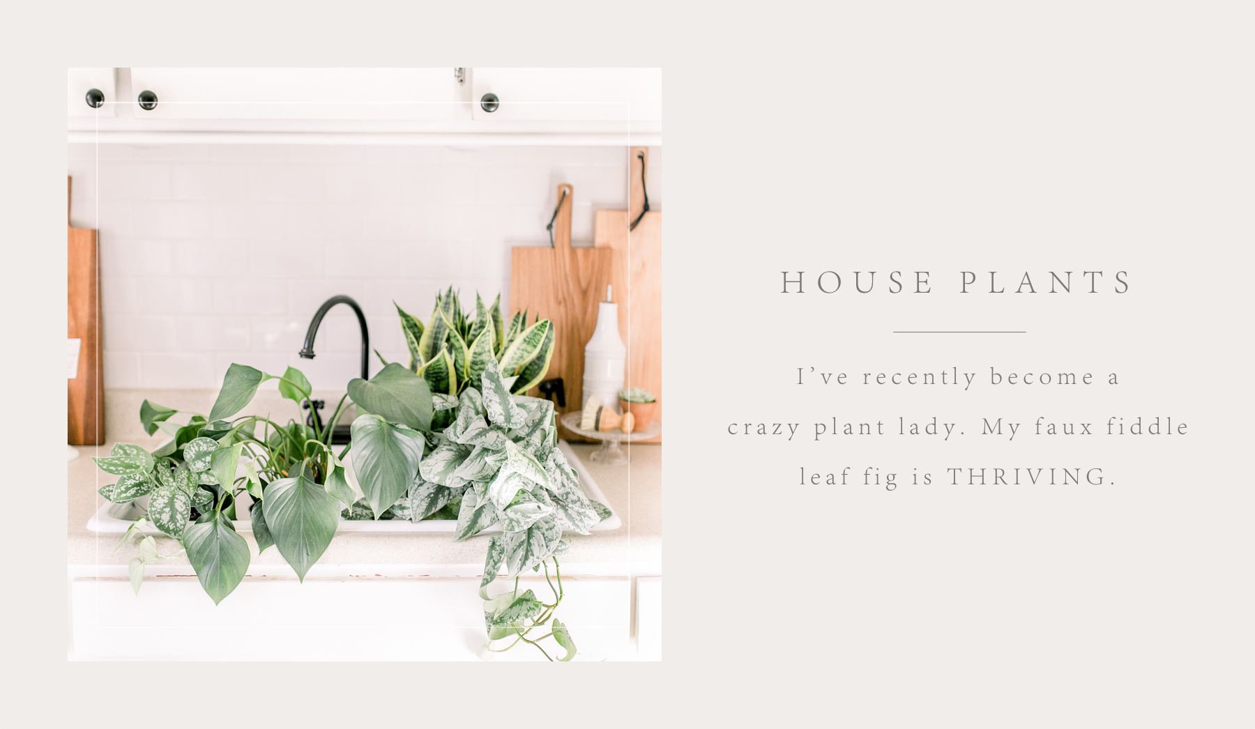 house plants2.png