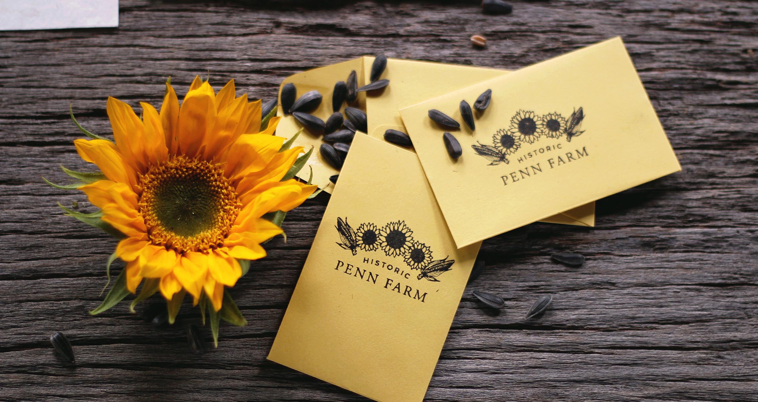 Wellstruck // Brand strategy and design for farm wedding venue Historic Penn Farm