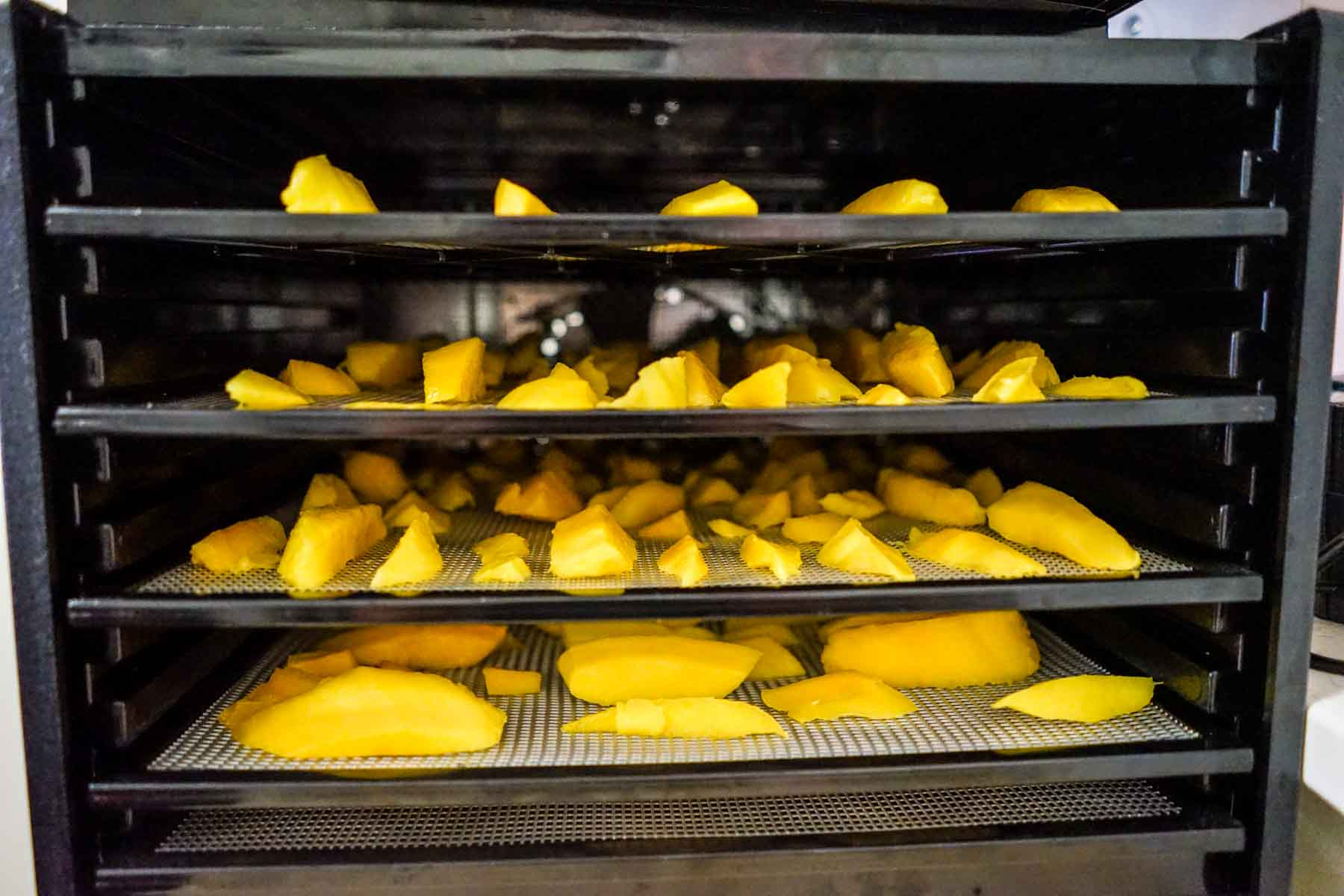 Place trays with mango on them in the dehydrator.