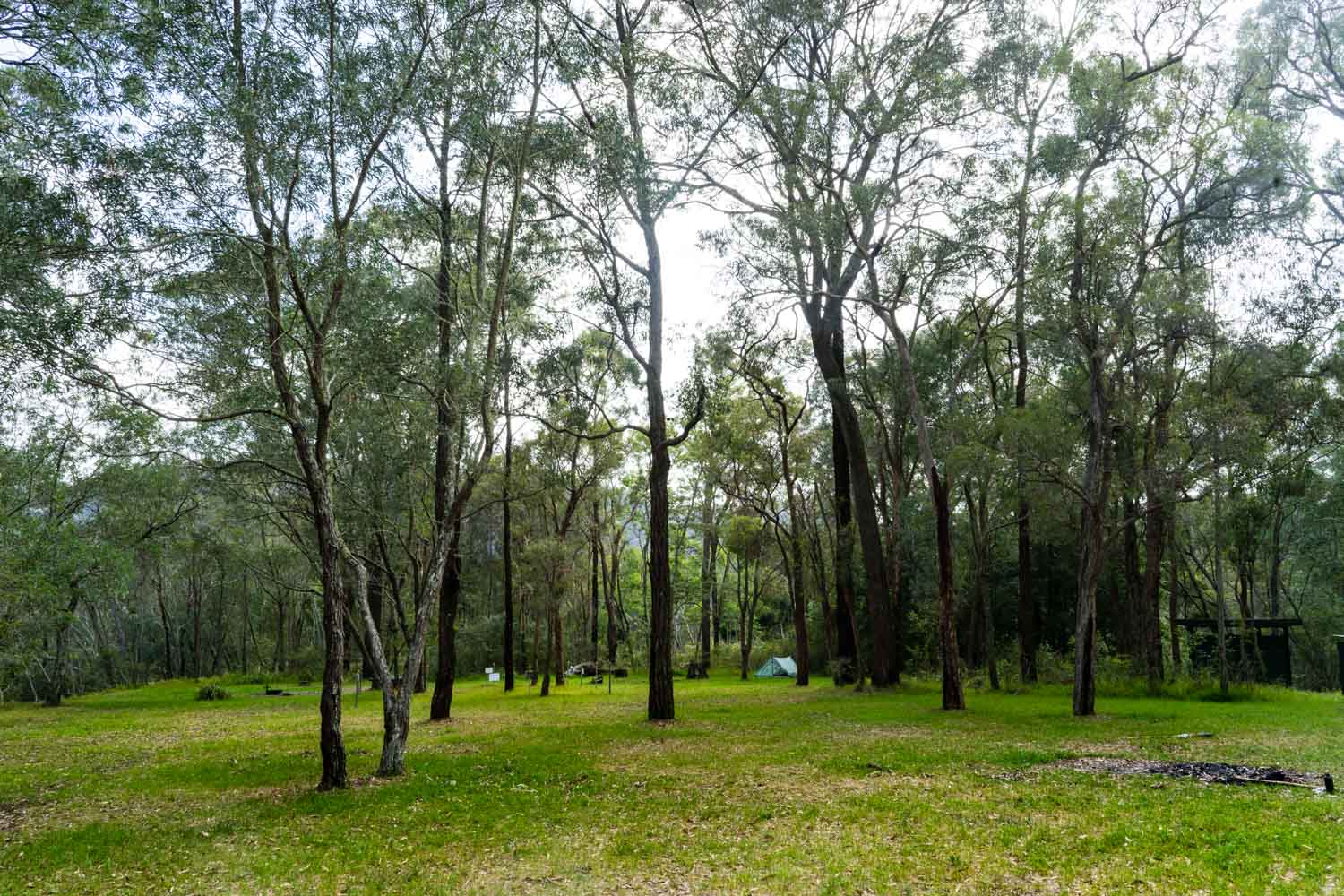 Gentlemans Halt campground is a large, grassy area. There's plenty of room to spread out.