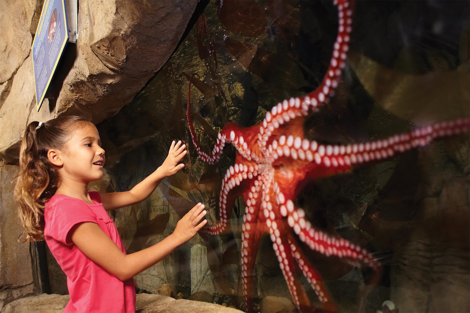 sealife-aquarium-octopus-300dpi-4X6.jpg