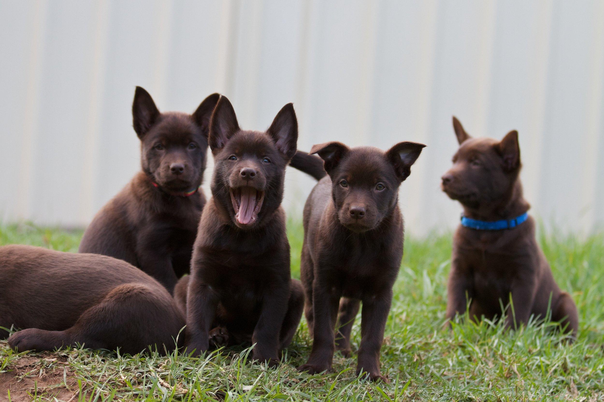 Puppies - 28April11 23.jpg