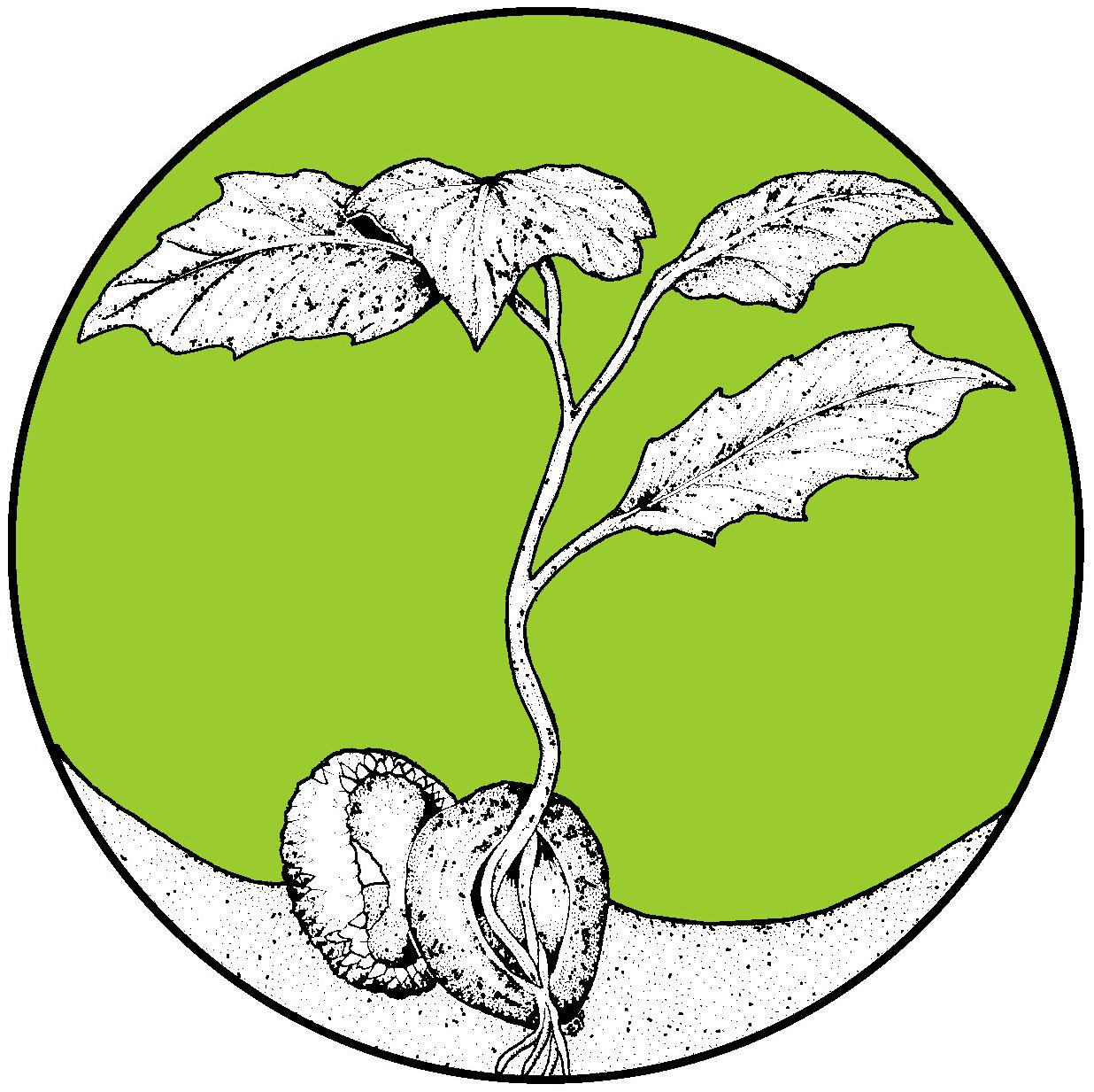 oak-seedling_FINAL copy.jpg
