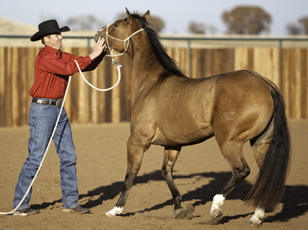Training a mouthy horse