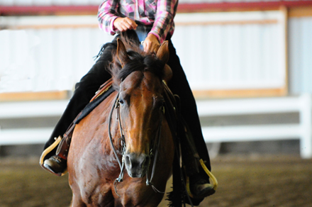 Reining horse anticipation