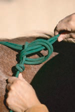 Tying a rope halter