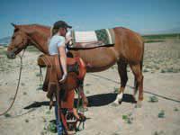 saddle-up1.jpg