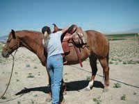 saddle-up3.jpg