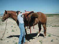 saddleup2.jpg