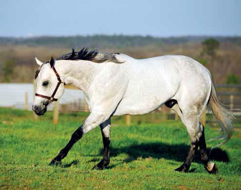 Pleasure Horse The Good Ranger