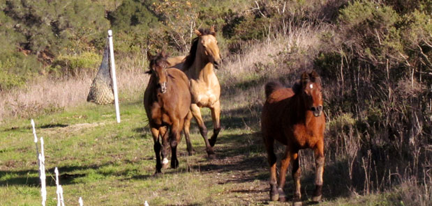 Encourage horses to move