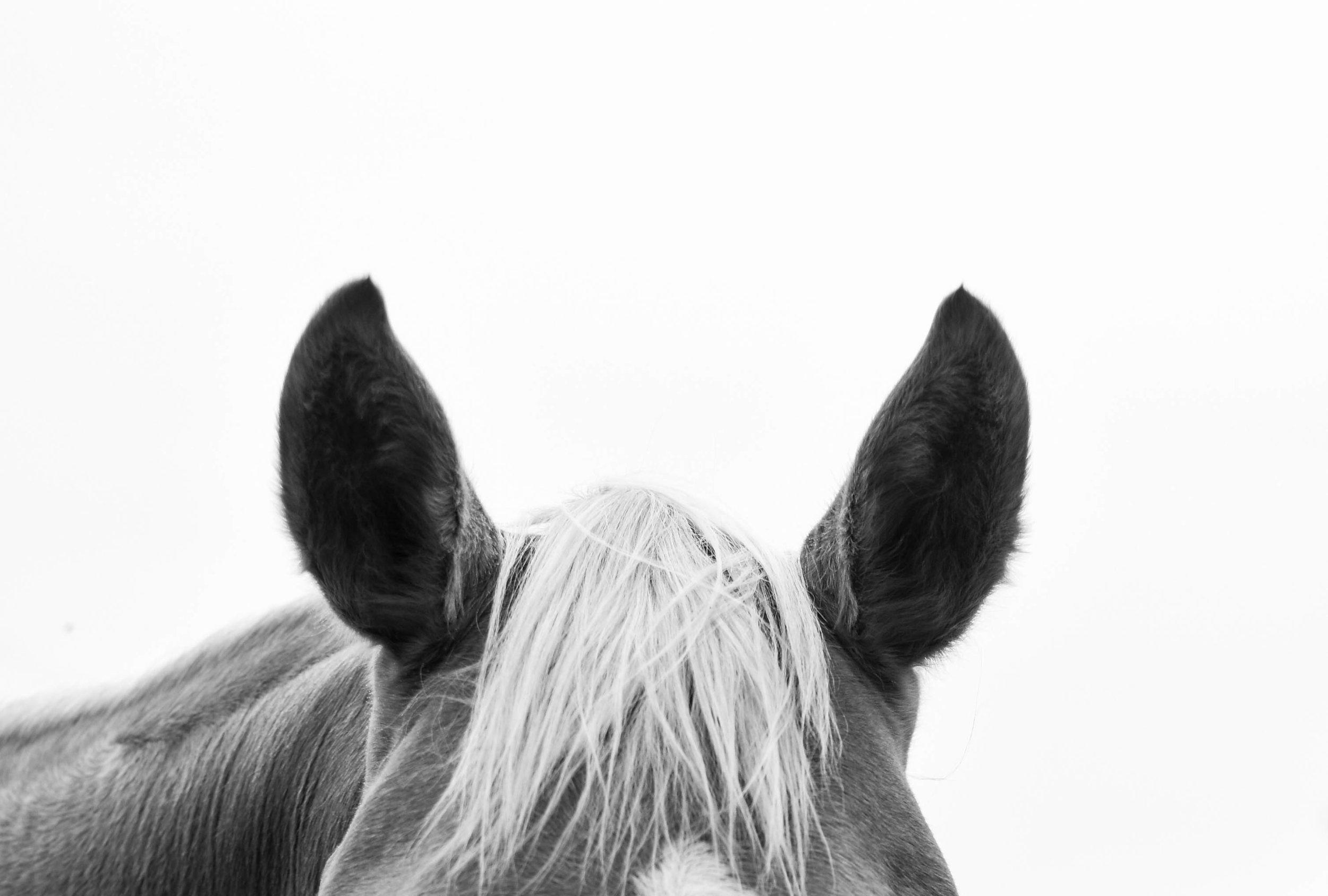 Horsemanship Audio - Listen to your favourite Horsemanship ArticlesNarrated by Sarah Jane Rose