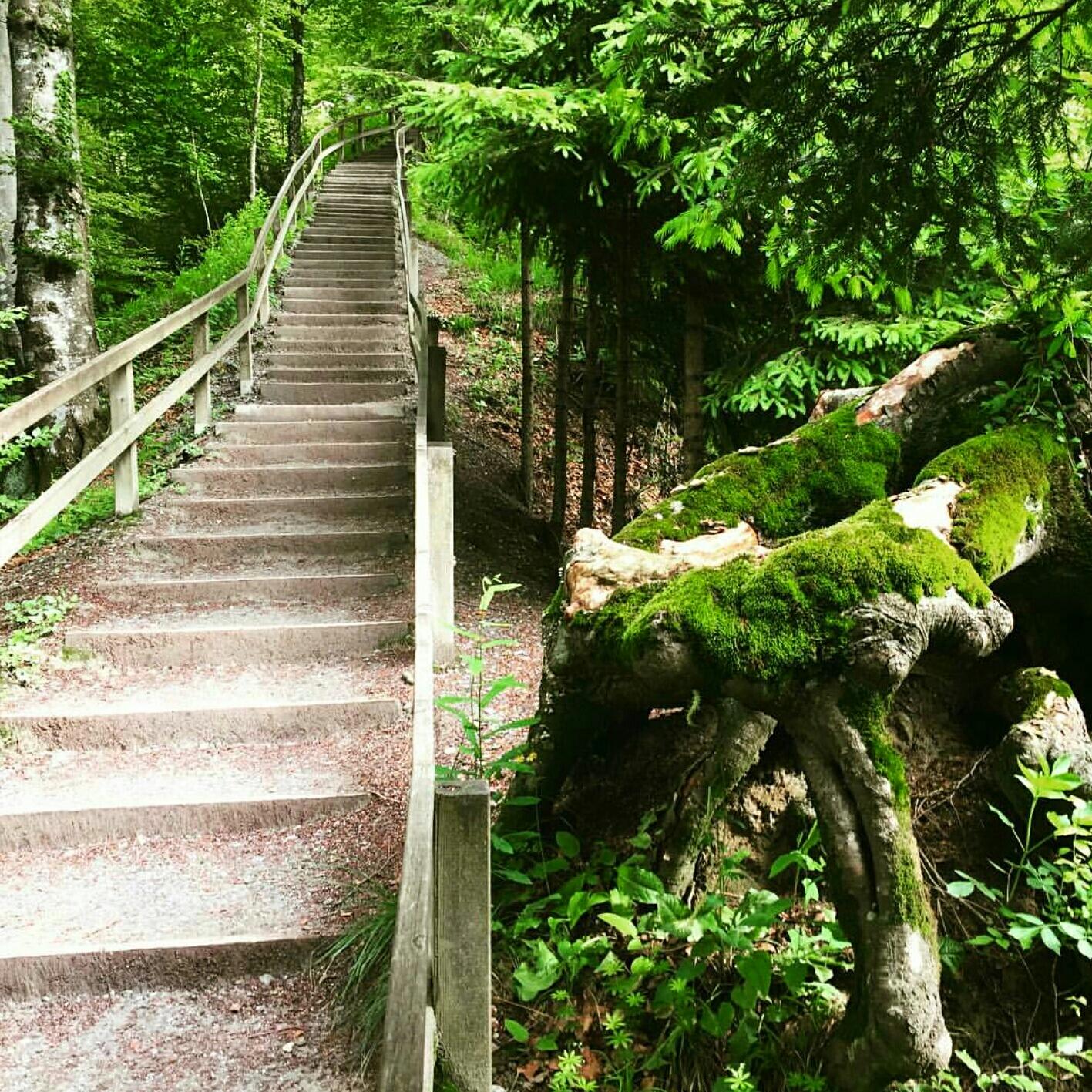 Trek en bosques aledaños a Zurich