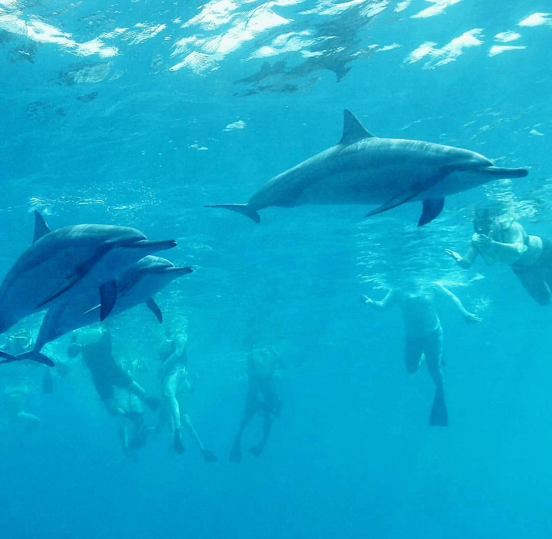 Nado con delfines silvestres en Honolulu