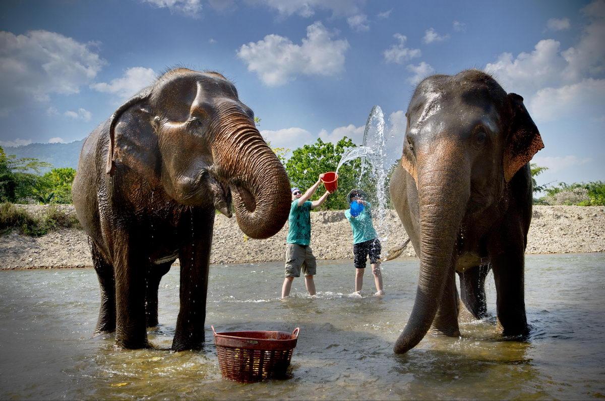 Santuario de Elefantes en Chiang Mai