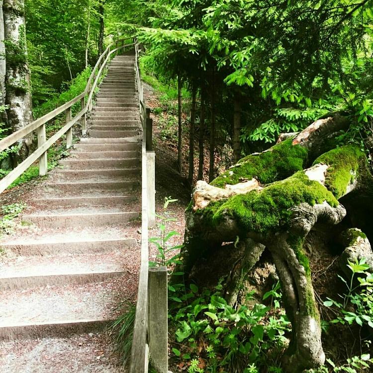 Zurich Forests