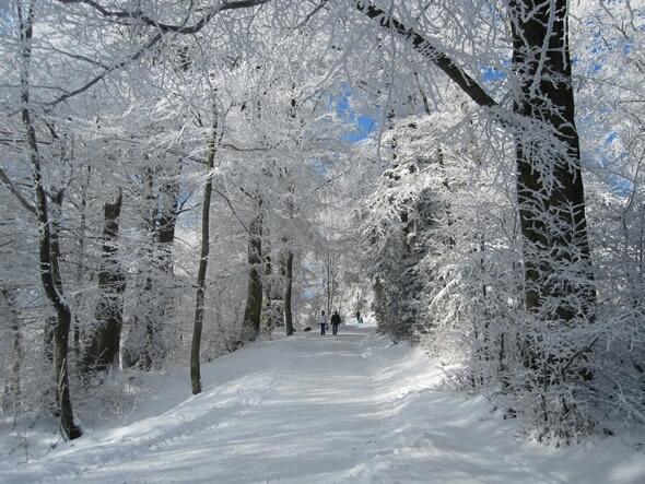 Zurich Forest in Winter