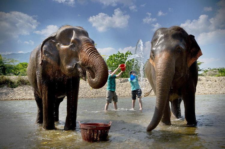 Elephants Sanctuary, Chiang Mai