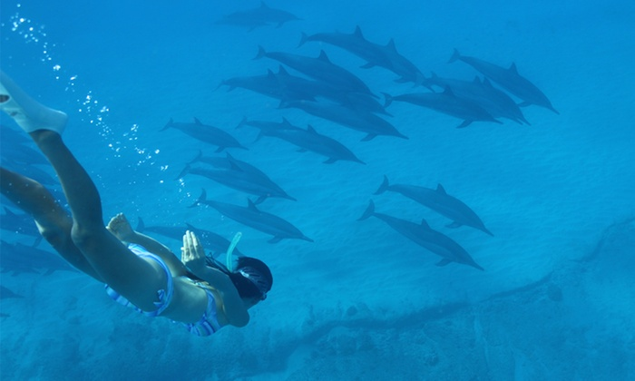 Swimming with wild dolphins