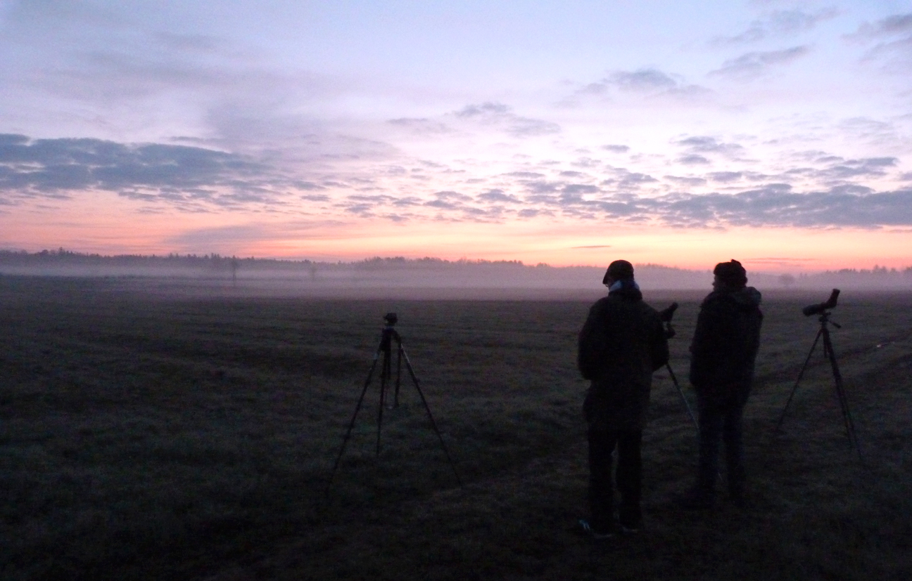 The BUBO lads overlooking Bialowieza Forest at dawn.