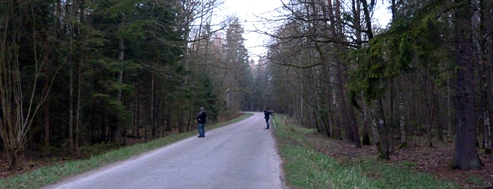 Roadside birding in the forest.