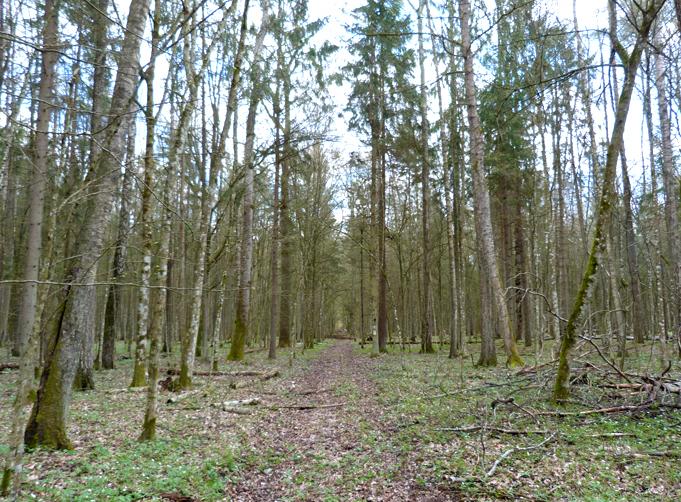 """The """"Woodpecker Walk"""""""