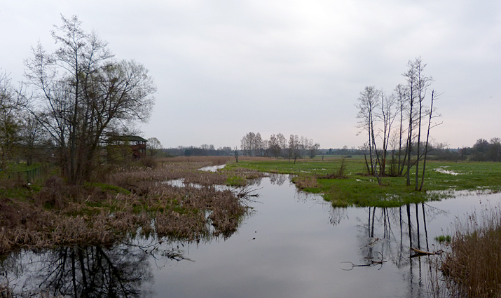 The marshes along the south side of Bialowieza town.