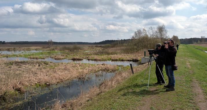 Birding the southern bank of Siemianowka Reservoir.
