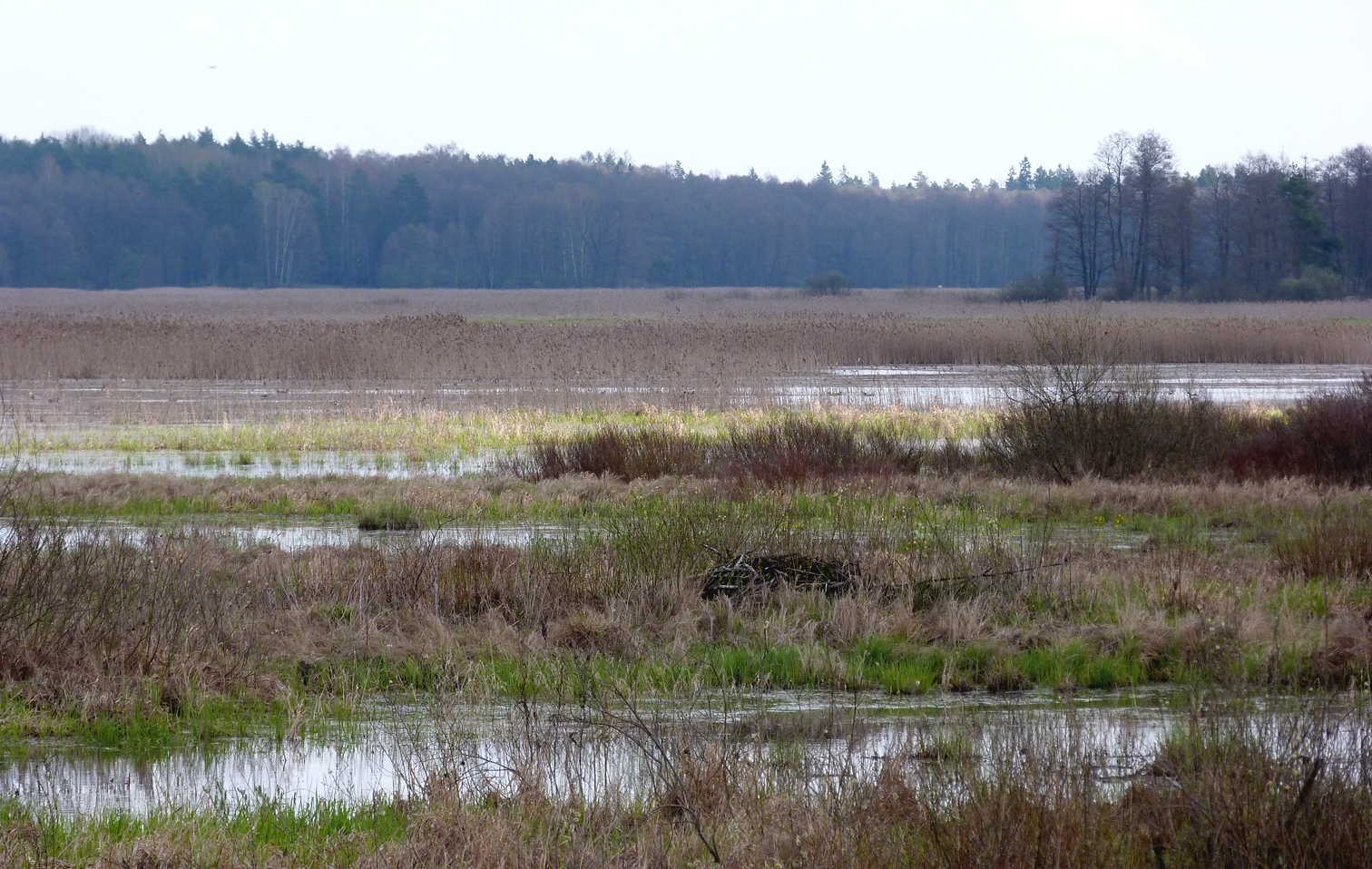 Siemianowka Reservoir is half-covered in reedbeds and full of birds. The most distant trees here are probably in Belarus.